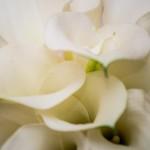 Menyasszonyi csokor fehér kálából
