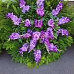 lila koszorú